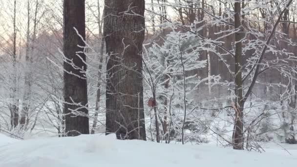 Zimní scény. Posun na zimní les. Zimní Lesní krajina