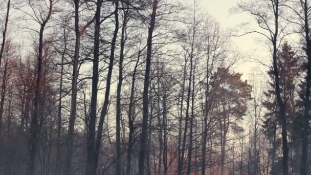 Podzimní les. Temnými kmeny. Chladné počasí. Ponurý Les v zimě