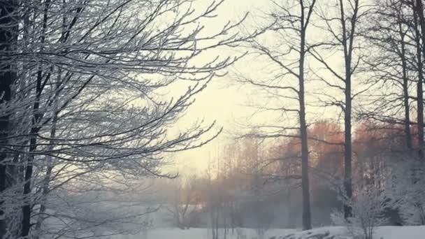 Zimní krajina. Zasněžené scéna v zimním lese s mlha nad zamrzlou řeku