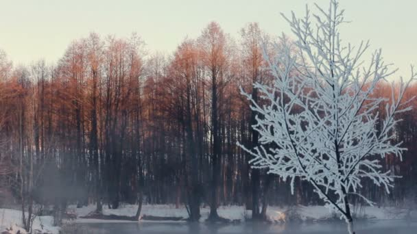 Mlhavé ráno v zimním lese. Zasněžené stromy v lese. Mlha nad řekou