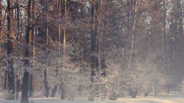 Winter Park. Nebligen Morgen in Winter Park. Verschneite Bäume in Winter park