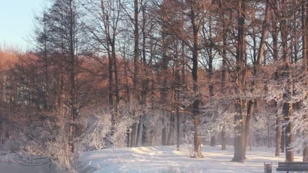 Winter park s lavičkách, řeky a v zimě stromy v oranžové světlo