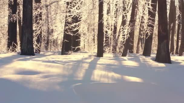 Winterlandschaft. schönen schneebedeckten Park im Winter. Sonnenlicht auf weißem Schnee