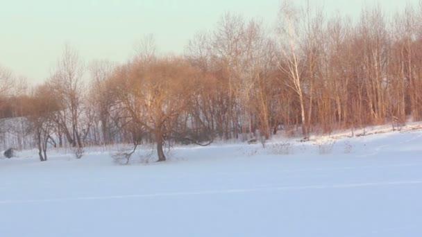 Sněhová pole. Zimní krajina. Slunce na zimní stromy. Zimní wonderland