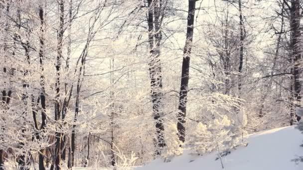 Zimní krajina. Zasněžené zimě v lese. Posun na zimní Les