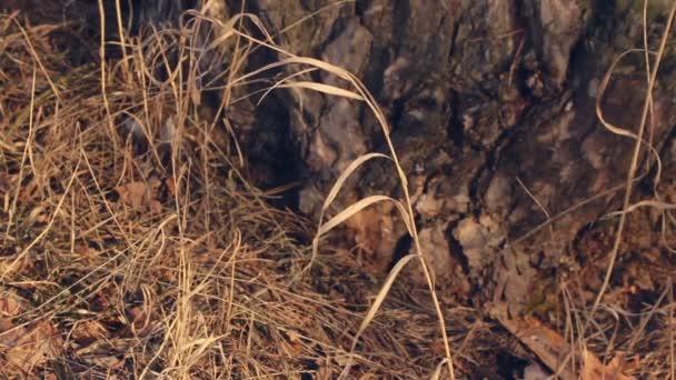Podzimní příroda. Suchých rostlin ve větru. Closeup. Podzimní Les pozadí