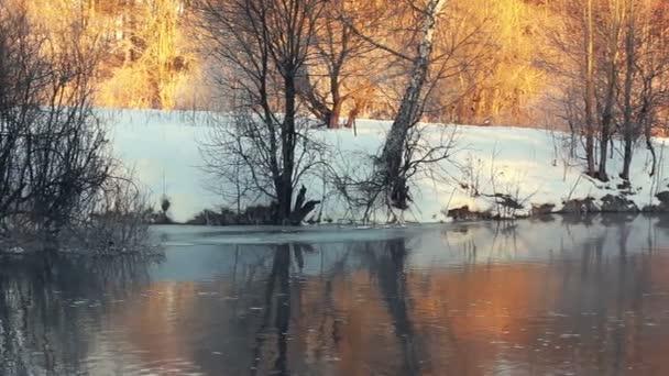 Winter riveru. Břeh řeky v zimním lese. Slunečního záření v zimním lese