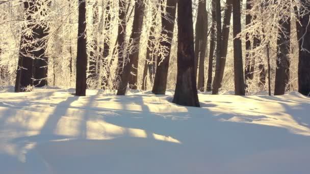 Winterlandschaft. Winterwald im Sonnenlicht. Winter Fluss im Park. Winter-Natur