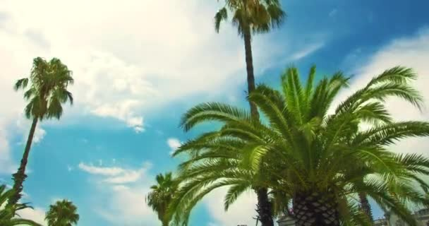 Palm tree on blue sky and white clouds. Timelapse of tropical palmtree