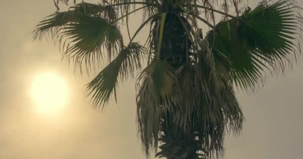 Sunset time lapse with tropical palm tree silhouette.