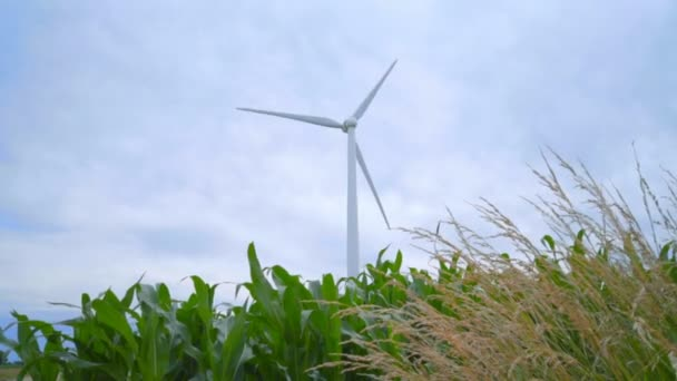 Větrné generátory v kukuřičném poli. Větrné turbíny farmy. Větrná turbína