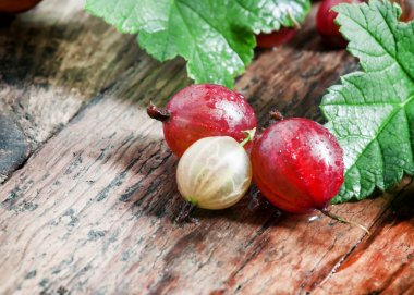 Fresh summer red gooseberries with leaves