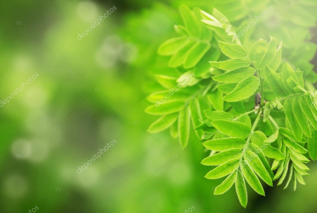 Fondo natural de hojas de color verde primavera — Foto de stock ...