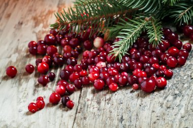 Ripe cranberries with fir branches