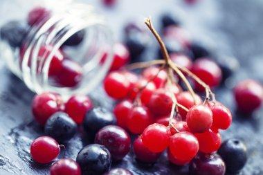 Cranberries, mountain ash, viburnum, chokeberries in a glass jar