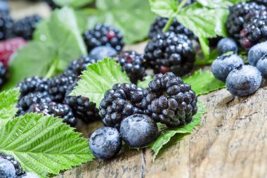 Fresh blackberries and blueberries with leaves