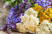 Fotografie Bouquet of herbs and wild flowers