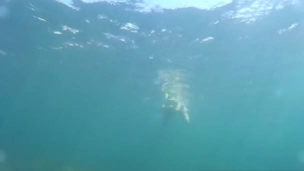Woman swimming underwater. Girl plunges into the sea. Diving, woman dives and swims under water. Go-Pro video.  Marine dive, active, bright impressions. Diving on the Black Sea.