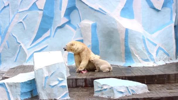 female polar bear feeding baby