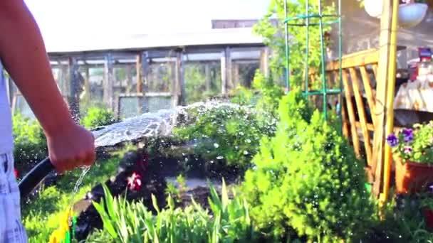 der Junge gießt Wasser auf Pflanzen