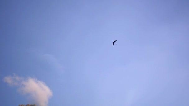 stoupající pták na obloze nad horami