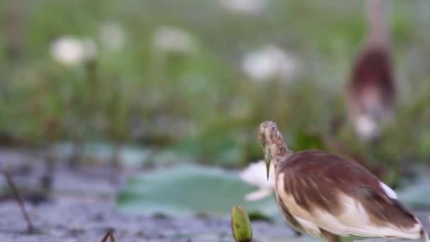 Rybník heron v prostředí