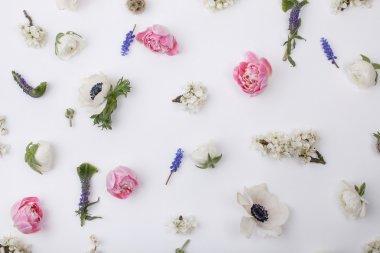 Heads of pastel, spring flowers