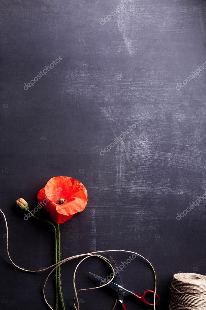 Red poppy flower and rye on old blackboard with scissors