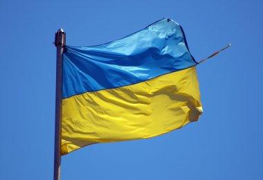 big torn Ukrainian flag flutters in wind against blue sky