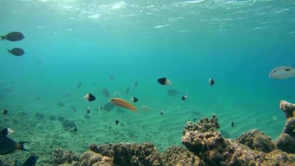 Unterwasserreinigungsstation am Korallenriff