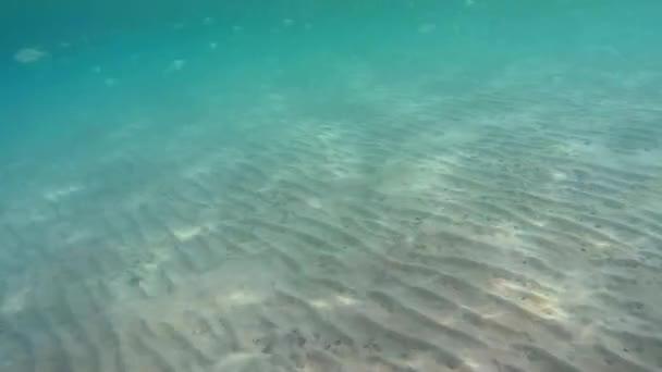 Fischschwärme im flachen Wasser