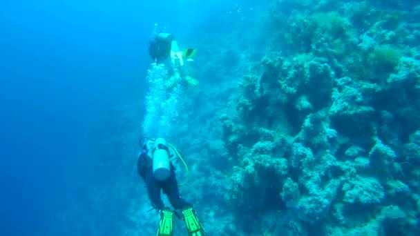 Three scuba divers swimming underwater