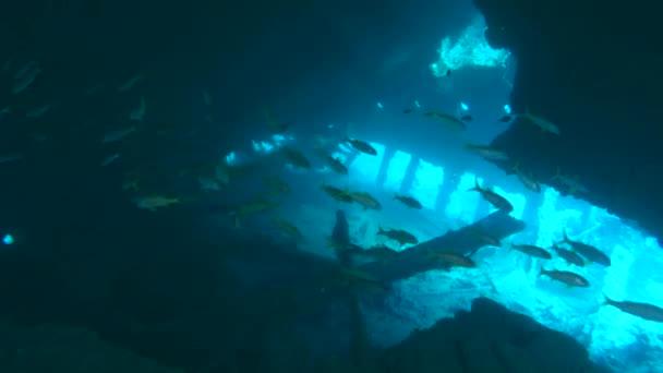 Scuba diver, plavání pod vodou