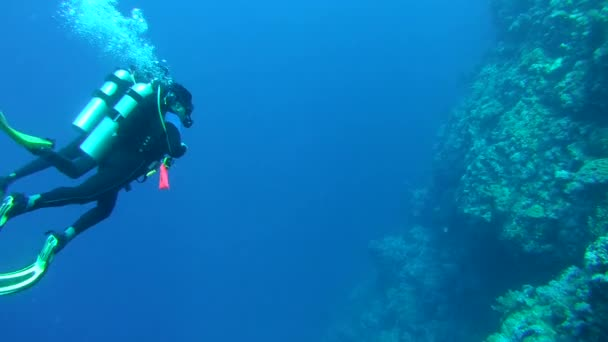 Two scuba divers swimming underwater