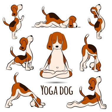 beagle doing yoga position