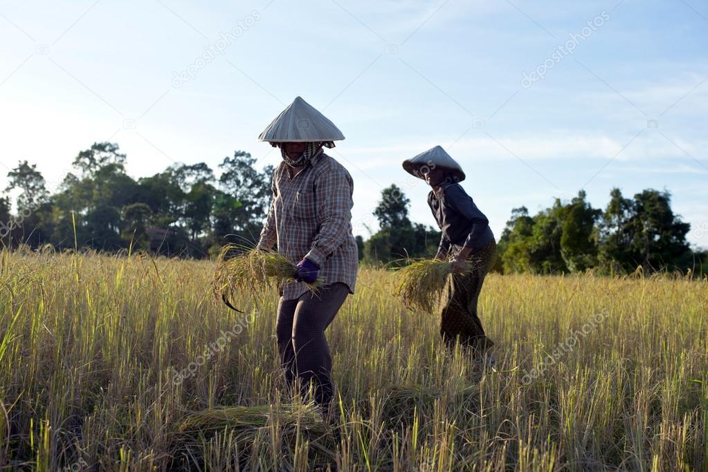 Farmers in Cambodia