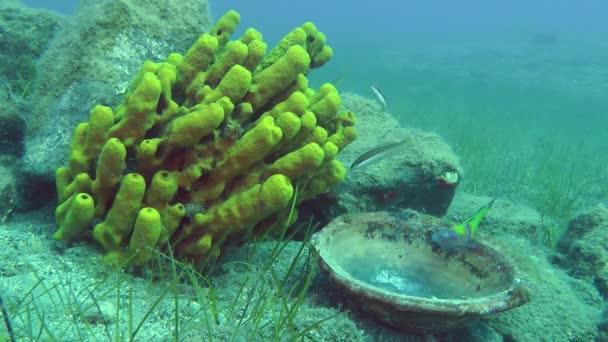 Starověké keramické misky na pozadí žlutá trubka houba