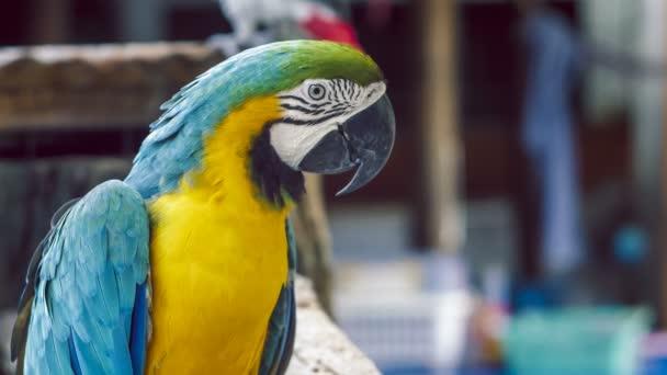 Papoušek ara. Modré žluté papoušek papoušek. Modrá zlatá papoušek papoušek. Ara ararauna. Neotropických papoušky ARA. Modrý papoušek papoušek pták. Modrý papoušek ara zvíře. Modrý papoušek papoušek barevný