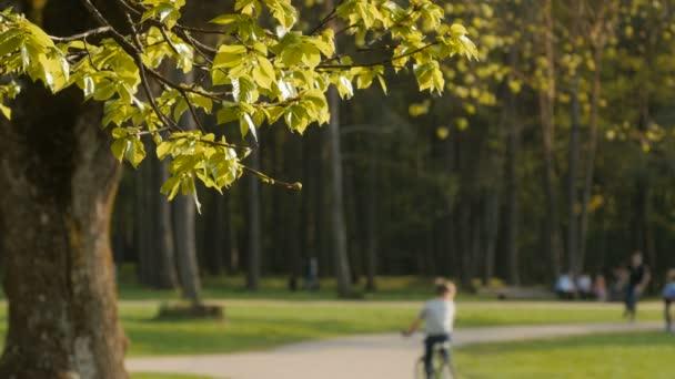 Rozmazané pozadí aktivit lidí v parku