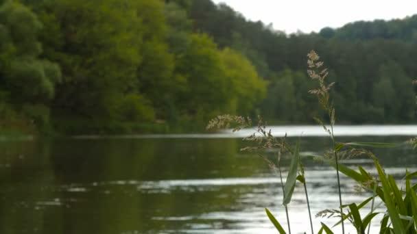 Přírodní pozadí trávy proti vodě