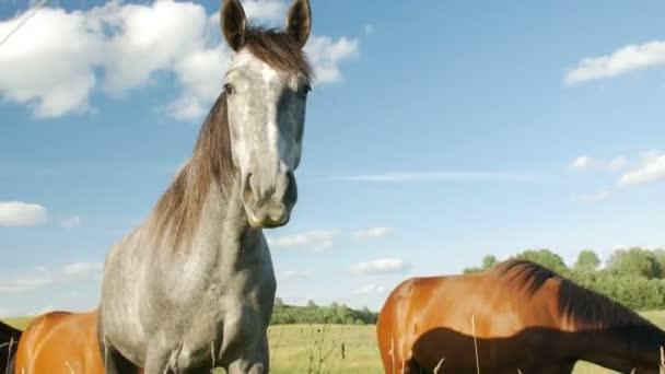 lovak, a zöld mezőben