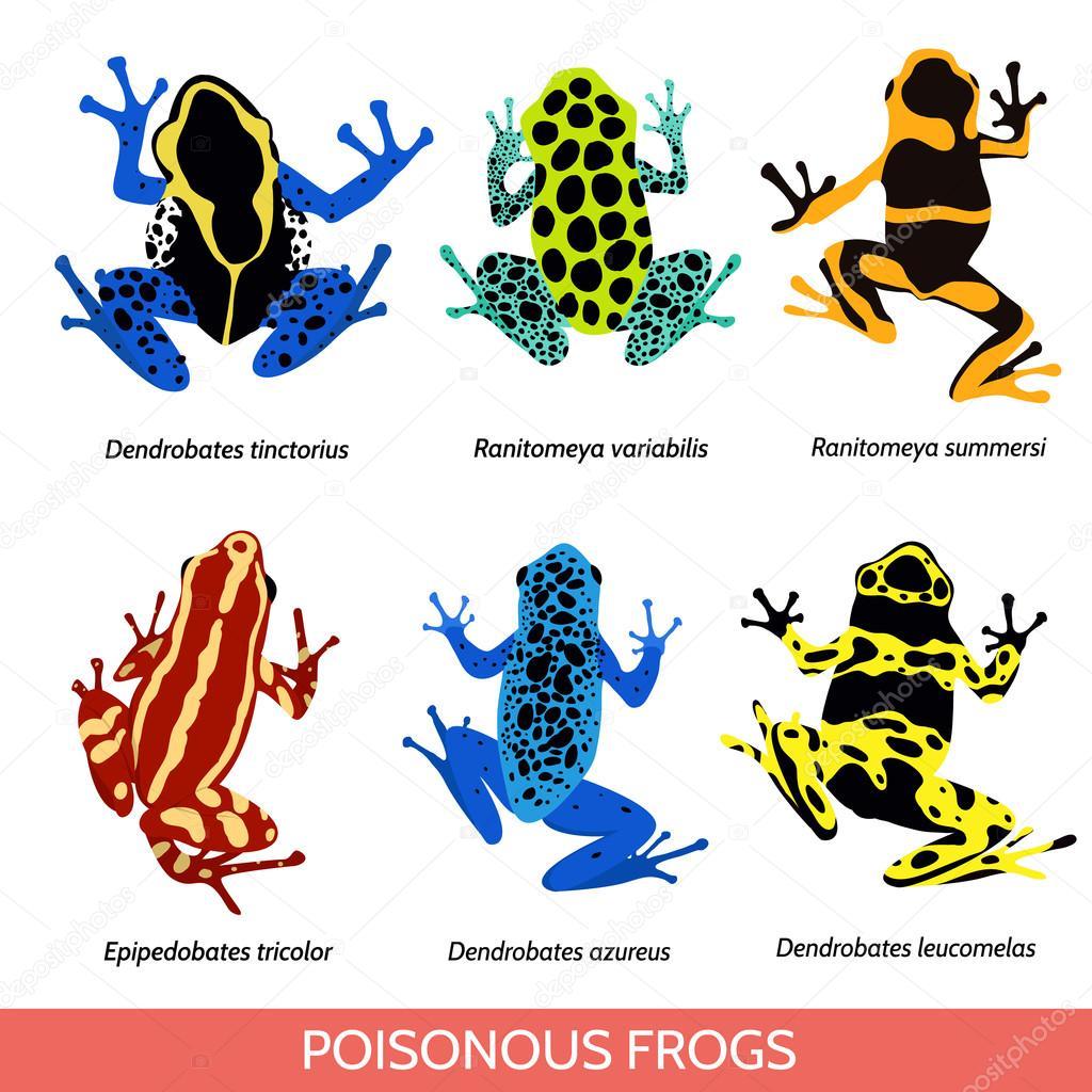Vektor-Illustration von giftigen Fröschen auf weißem Hintergrund ...