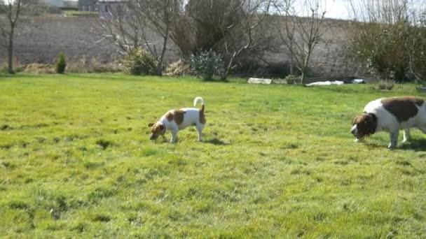 Psi, hrát venku