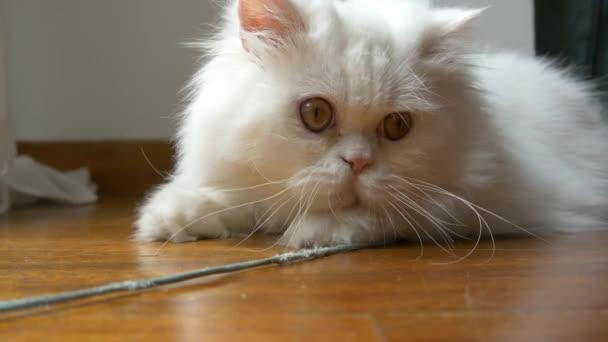 macska játék, és néz a kamerába