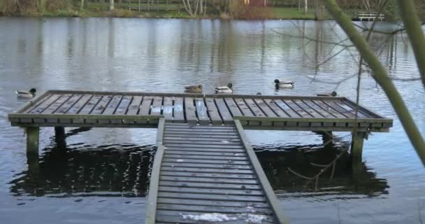 wooden moor lake and ducks