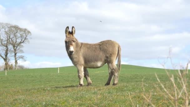 mule horse on meadow