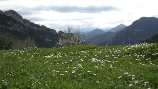 pole plné bílé květy