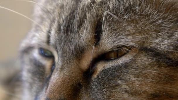 padající kočka spánek