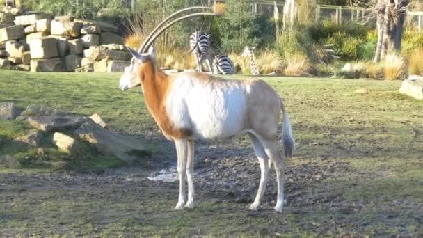 az állatkert állat antilop
