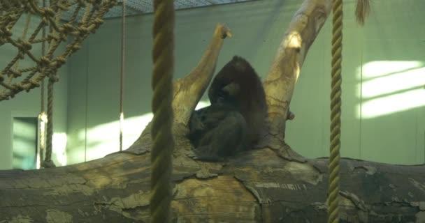 monkey, ape animal in zoo